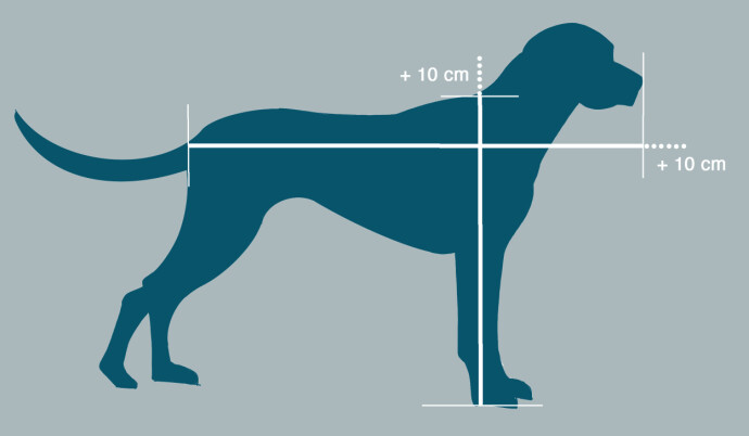Lengden på buret: Mål fra halerot til snute og legg til 10 cm. Høyden: Mål fra pote til manke og legg til 10 cm. Illustrasjon: Øivind Lie-Jacobsen