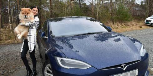 Image: Valpen satt fast i Jannes Tesla: - Hadde den vært litt større, hadde det ikke gått